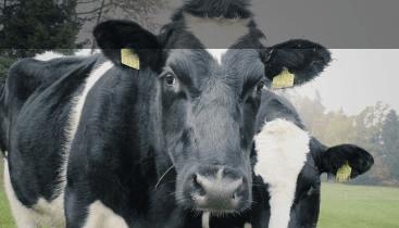 Farm Pressure Systems